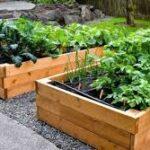 Clases de agricultura urbana